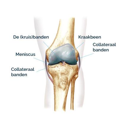 Knie zonder knieartrose - CortoClinics
